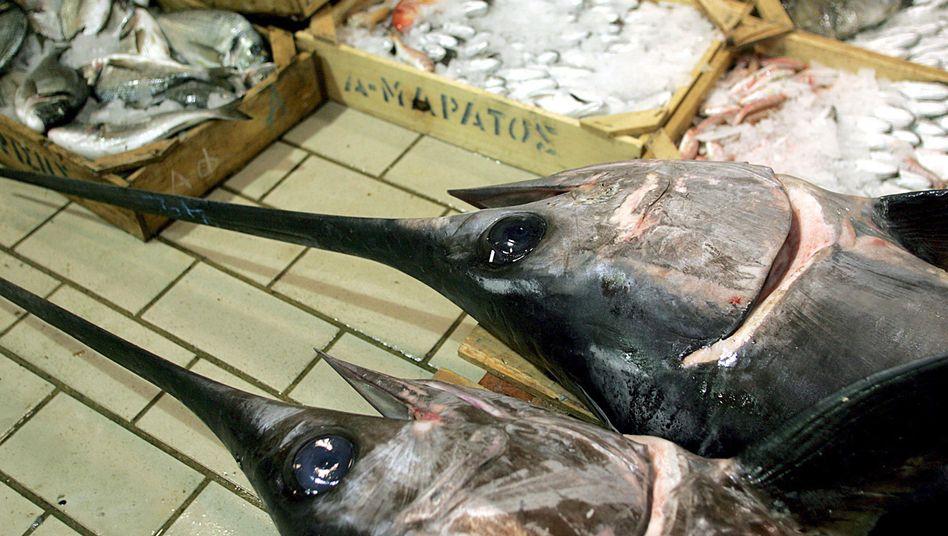 Schwertfische auf einem Markt: Die Überfischung bedroht die Bestände