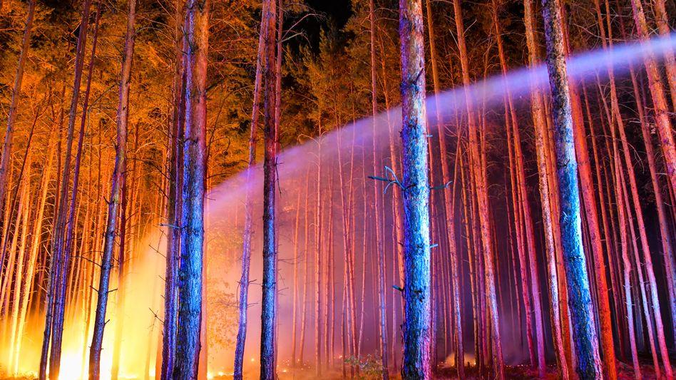 Waldbrand in einem Kiefernforst in Brandenburg: Durch Hitze- und Trockenperioden könnten Feuer häufiger werden