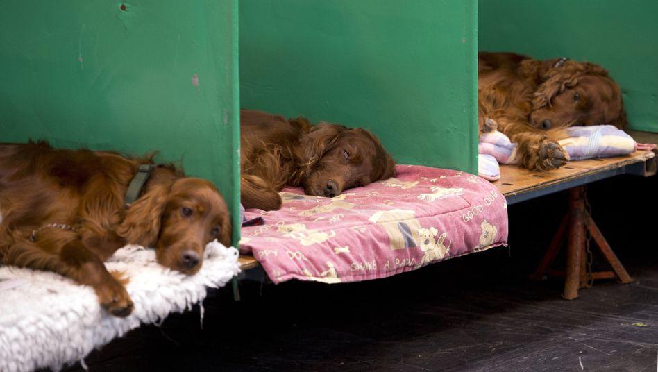 Entspannung pur: Schlafende Hunde soll man bekanntlich nicht wecken. Gilt das auch für Menschen?