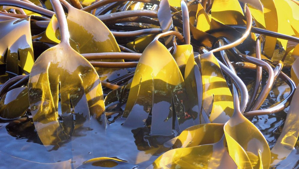 Untersuchung in Nord- und Ostsee: Plastik im Fisch