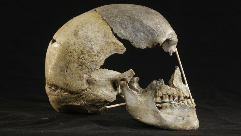 Schädel der Frau von Zlatý kůň: Eine der ersten Europäerinnen