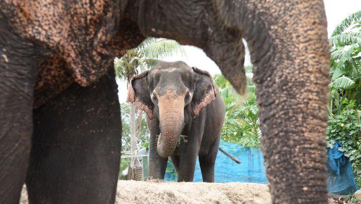 Mae Sapok: Fußballspiel im Elefantencamp