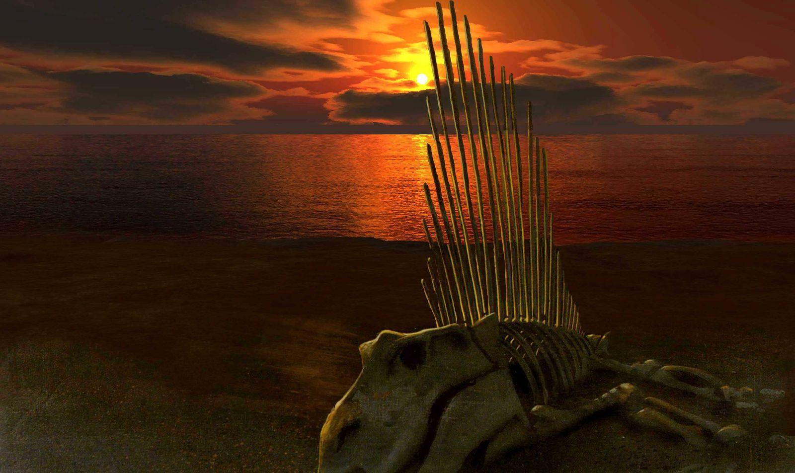 Extinction du Permien Permian extinction Vue d artiste d un squelette de reptile mammalien Ther