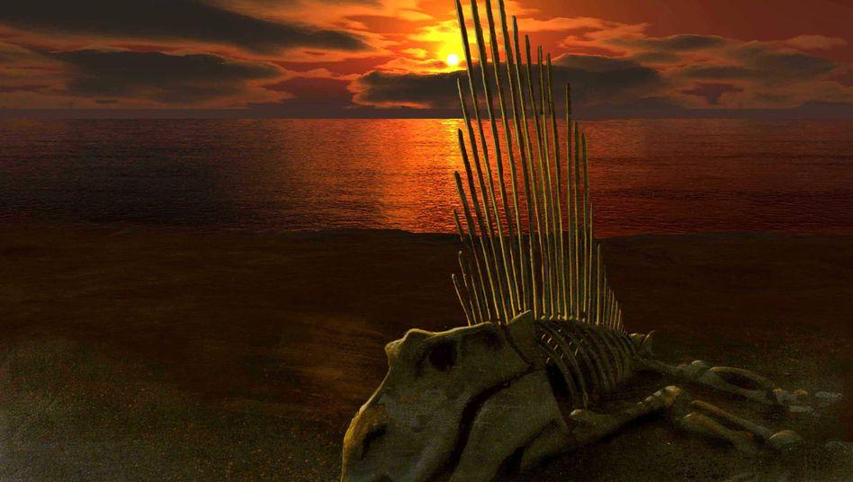 Das Skelett eines Landwirbeltiers aus der Gruppe der Therapsiden: Auch an Land starben damals 70 Prozent der Arten aus