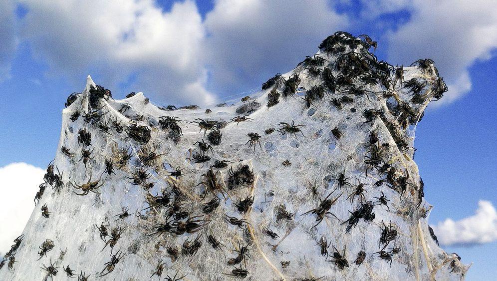 Flutfolgen: Spinnenplage in Australien