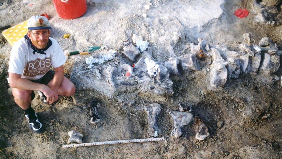 Forscher mit versteinerten Fußknochen eines Dinosauriers