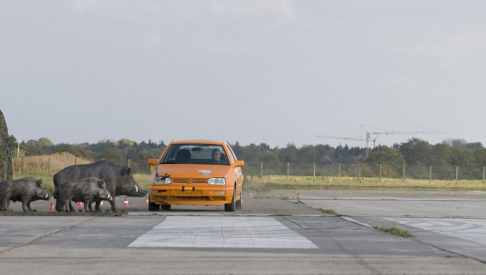 Photo Gallery: Crash Tests on Wild Boars