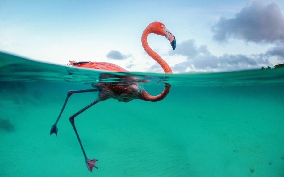 Wie viele Wasservögel liebt Bob auch das Meer.