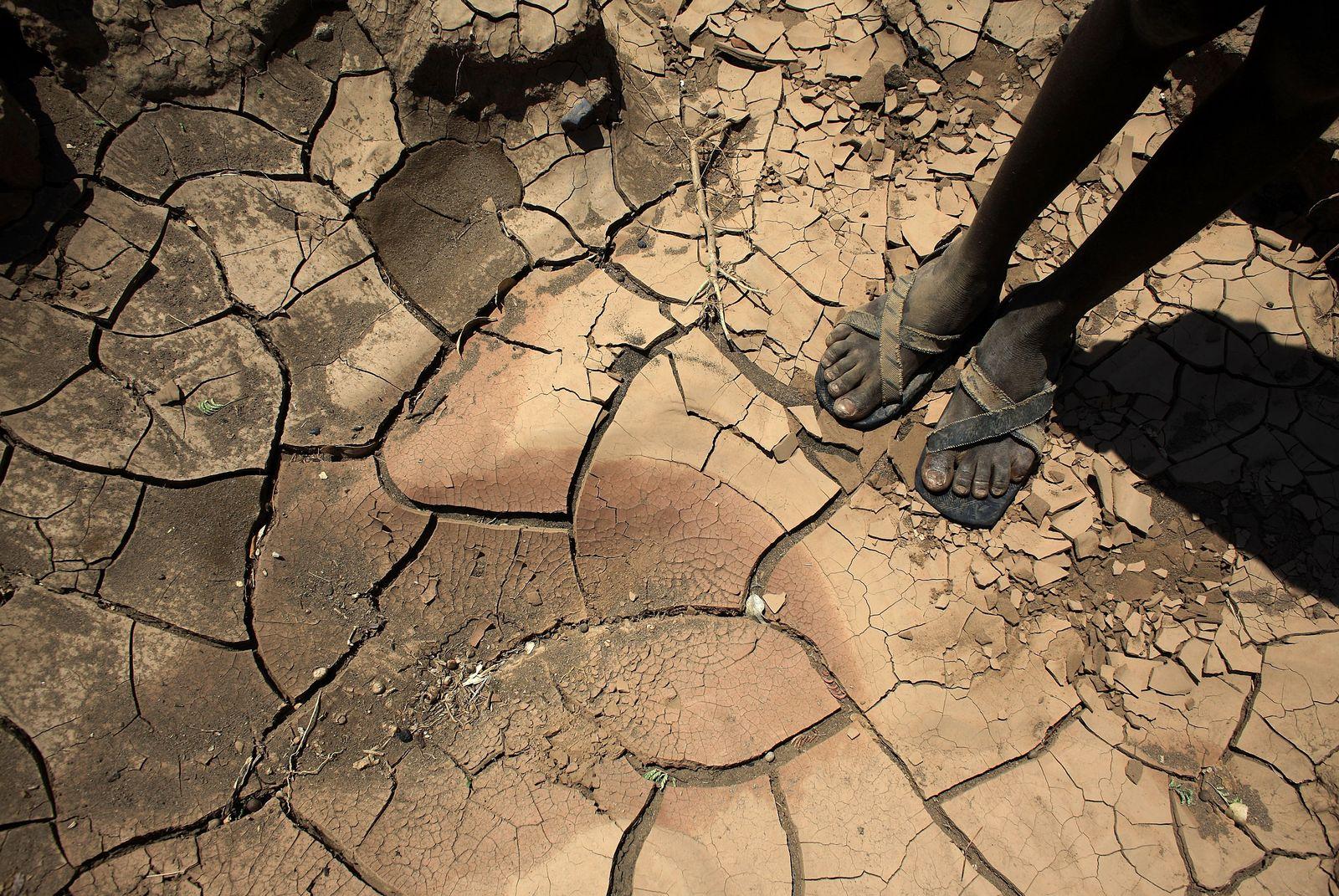Dürre/ Afrika