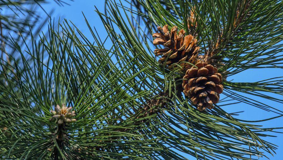 Symbolbild: Baum des Anstoßes