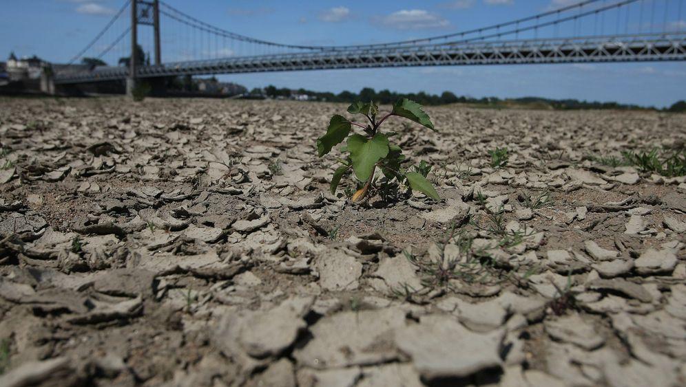 Dürre in Frankfreich: Bauern fürchten Ernteausfälle