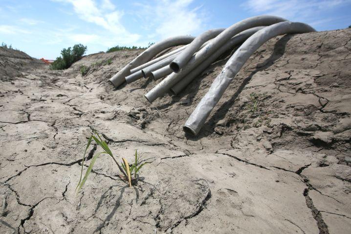 Bewässerungsrohre im Sacramento-San-Joaquin-Flussdelta: Ein Ende der Dürre ist nicht in Sicht