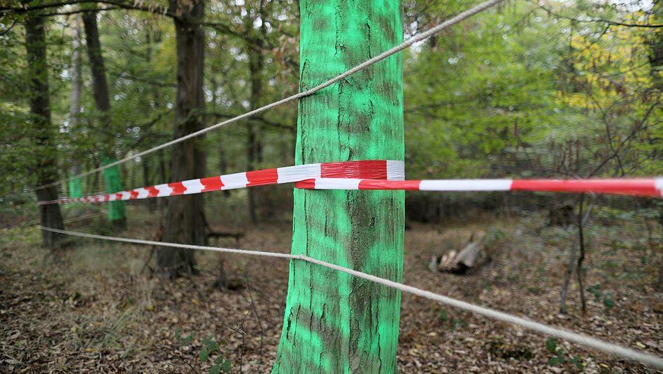 Absperrung im Hambacher Forst