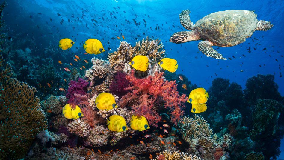 Unterwasserwelt (im Roten Meer): Den Wert der Natur beschreiben