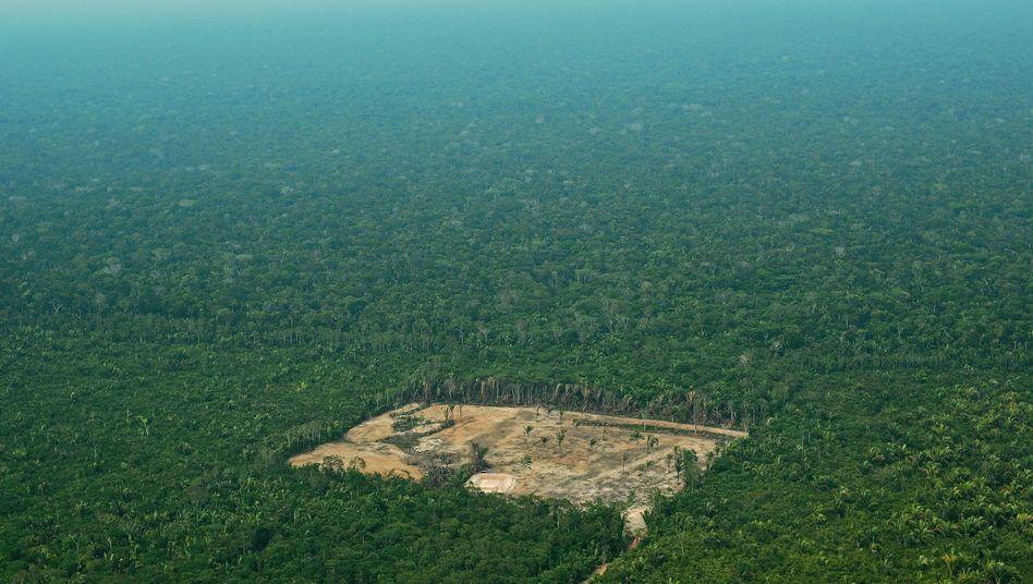 Ein abgeholztes Feld im brasilianischen Amazonas-Regenwald