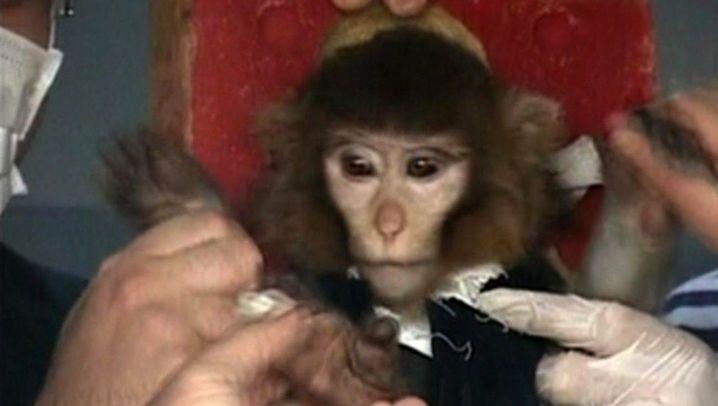 Irans Weltraumprogramm: War der Affe oben?