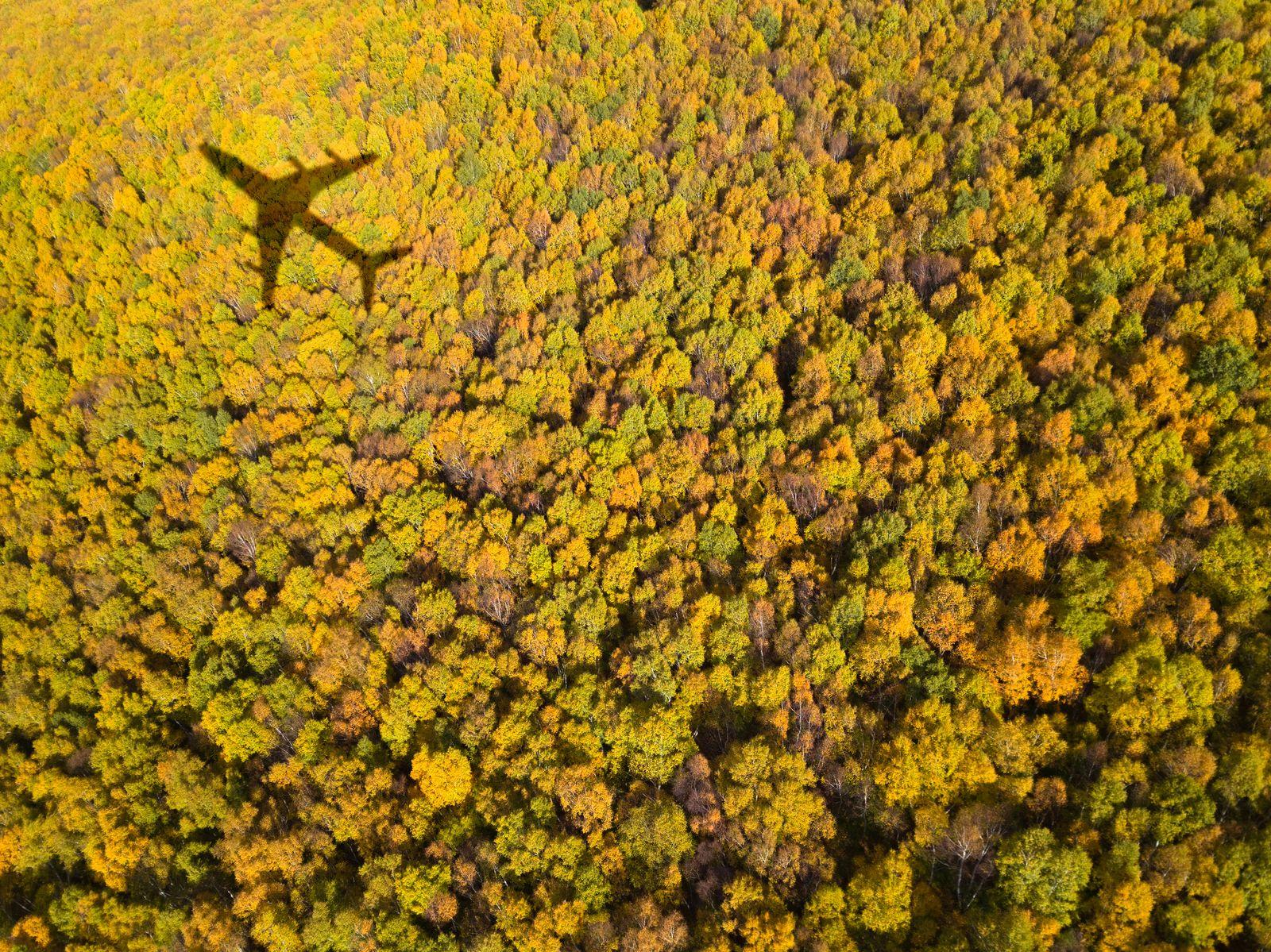 EINMALIGE VERWENDUNG Fliegen / CO2