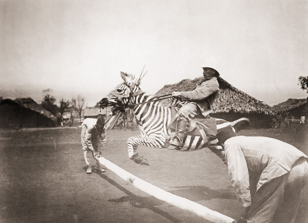 Hurra, es kann springen – deutscher Kolonialoffizier in Ostafrika beim Ritt auf einem Zebra