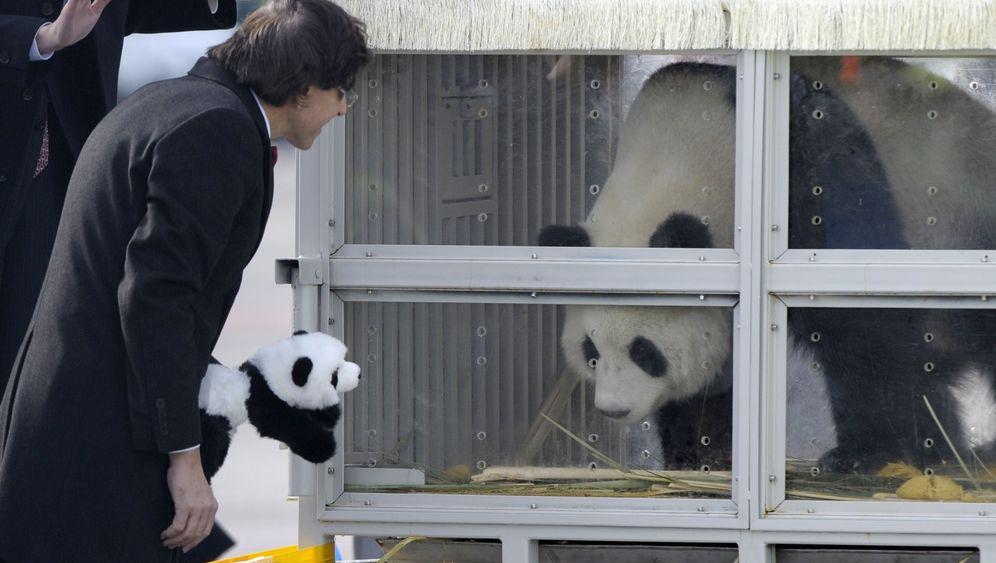 Panda-Reise: Belgien, wir kommen