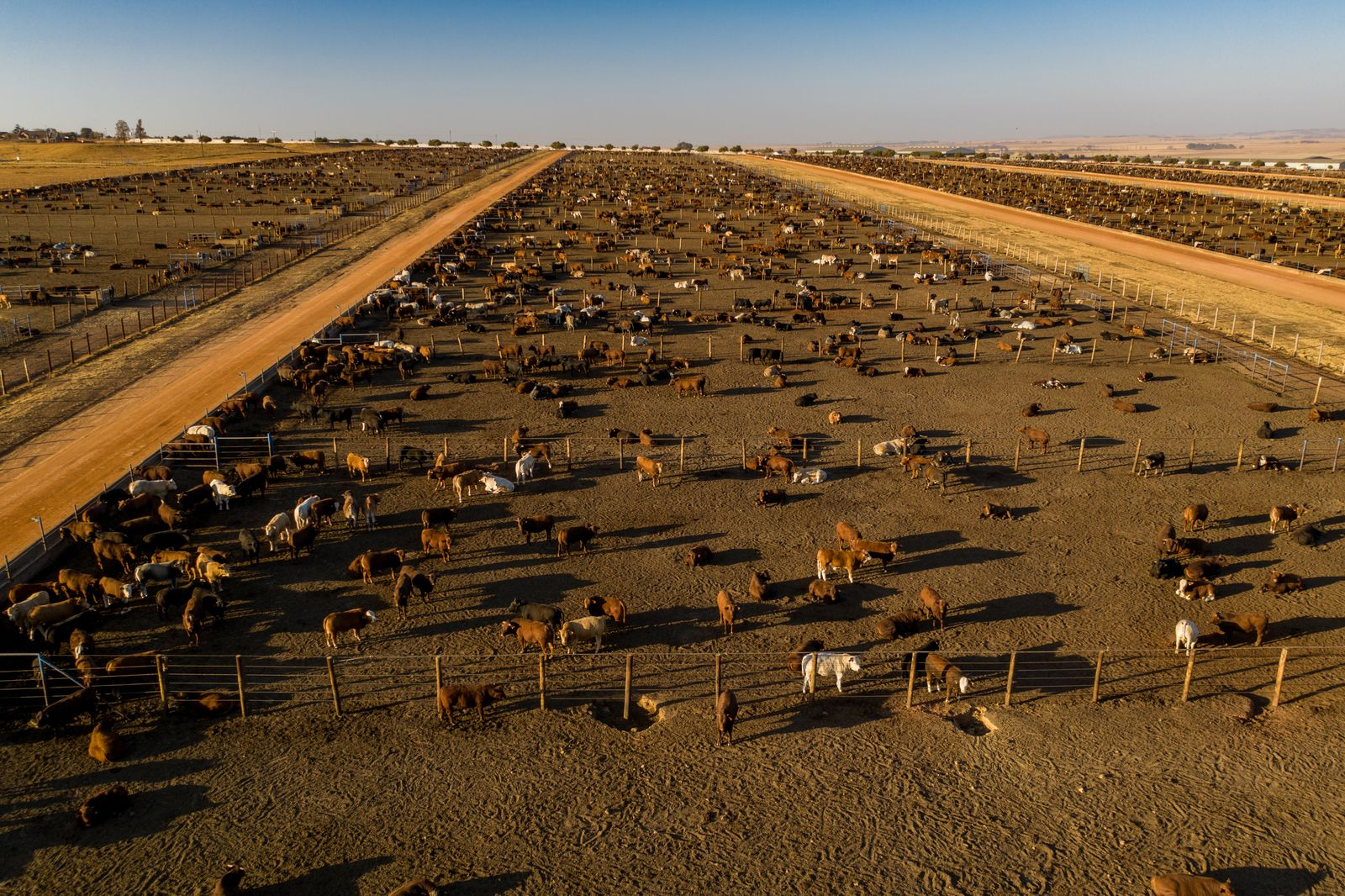 Aerial view of a large cattle feedlot