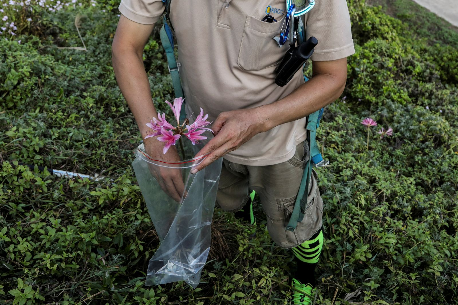 The Wider Image: Taiwan plant hunters race to collect rare species before they are gone