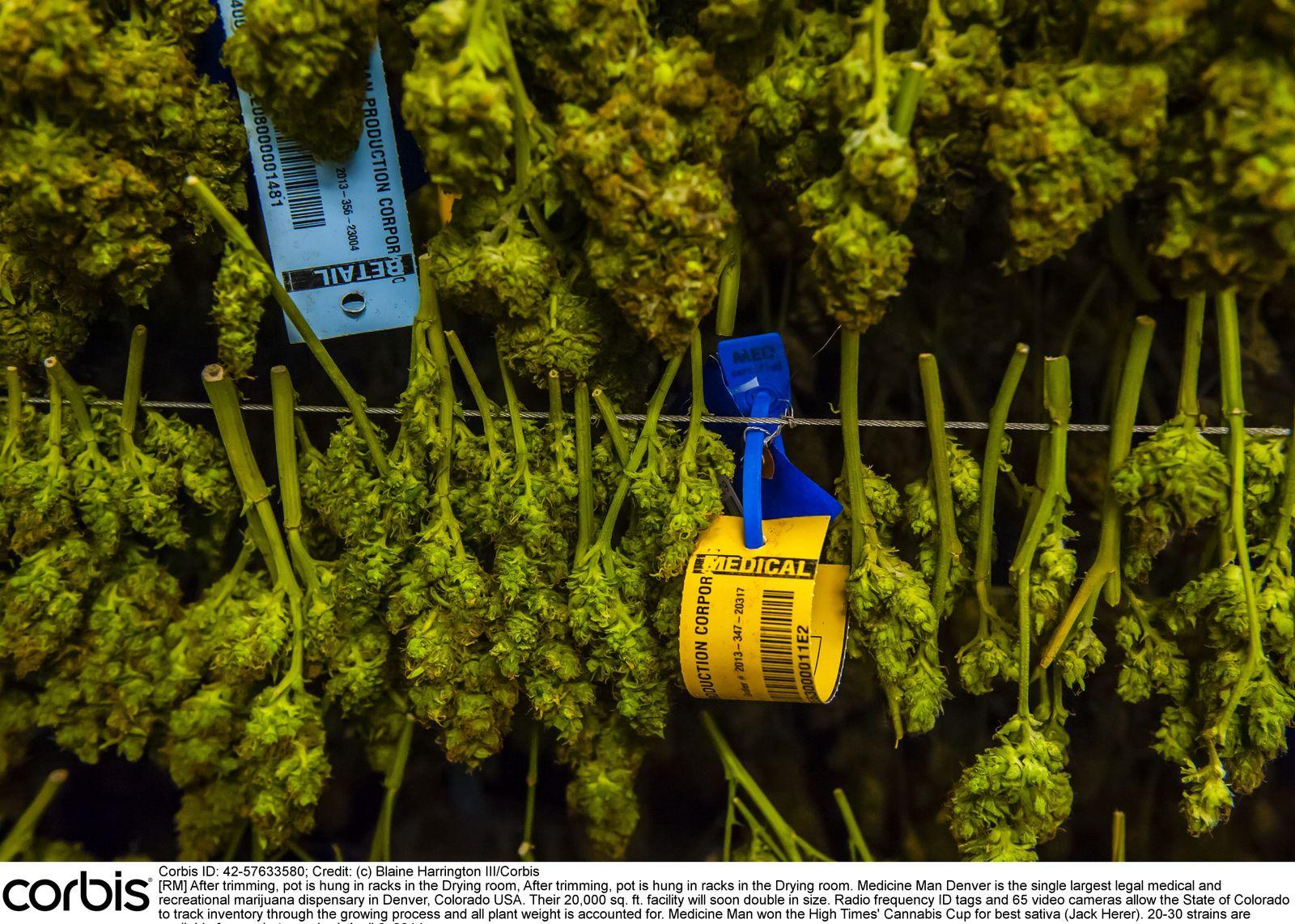 NICHT MEHR VERWENDEN! - Marihuana / Cannabis / Denver