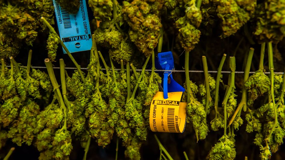 A marijuana drying room in Denver, Colorado: The war on drugs is, to a significant degree, a war on drug users -- a war on People.
