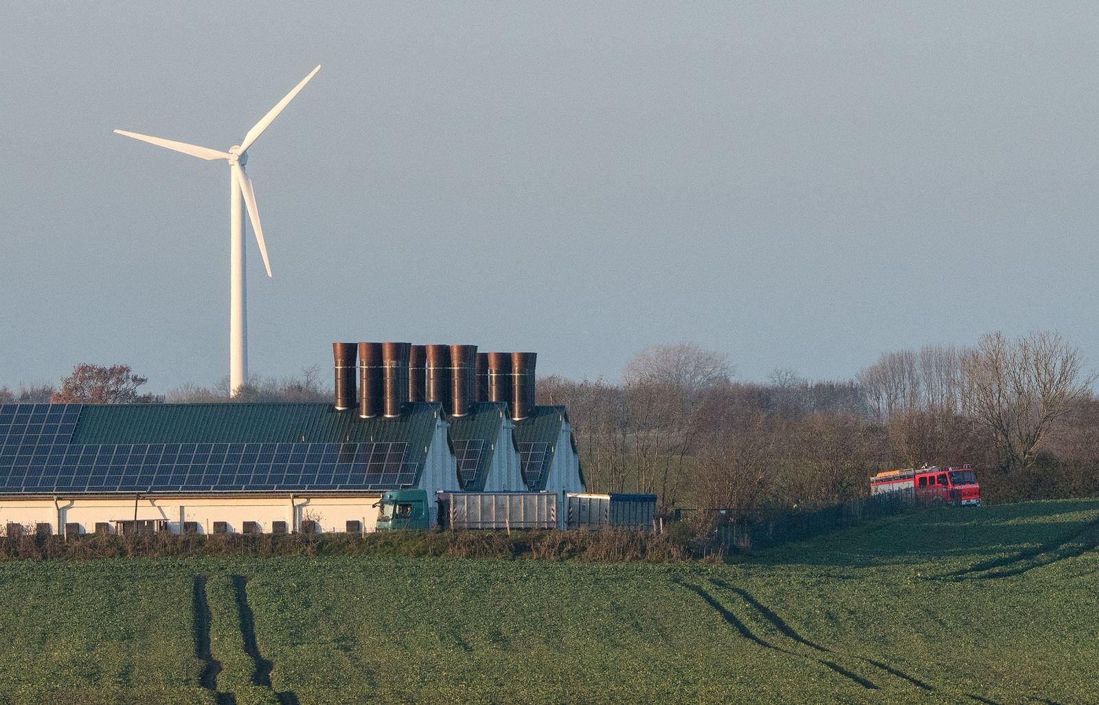 Geflügelpest in Schleswig-Flensburg