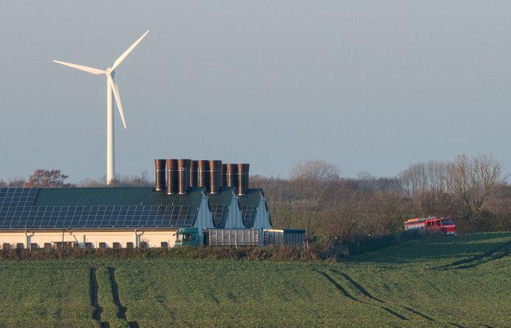 Betroffener Geflügelhof in Grumby (Schleswig-Holstein)