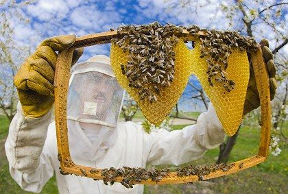 Beekeepers across Europe have been struggling to keep their hives alive. A recent die-off in Germany is the latest blow to a beleaguered but vital species.
