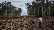 Tausende Hektar Wald vernichtet – trotzdem gibt es ein Ökosiegel