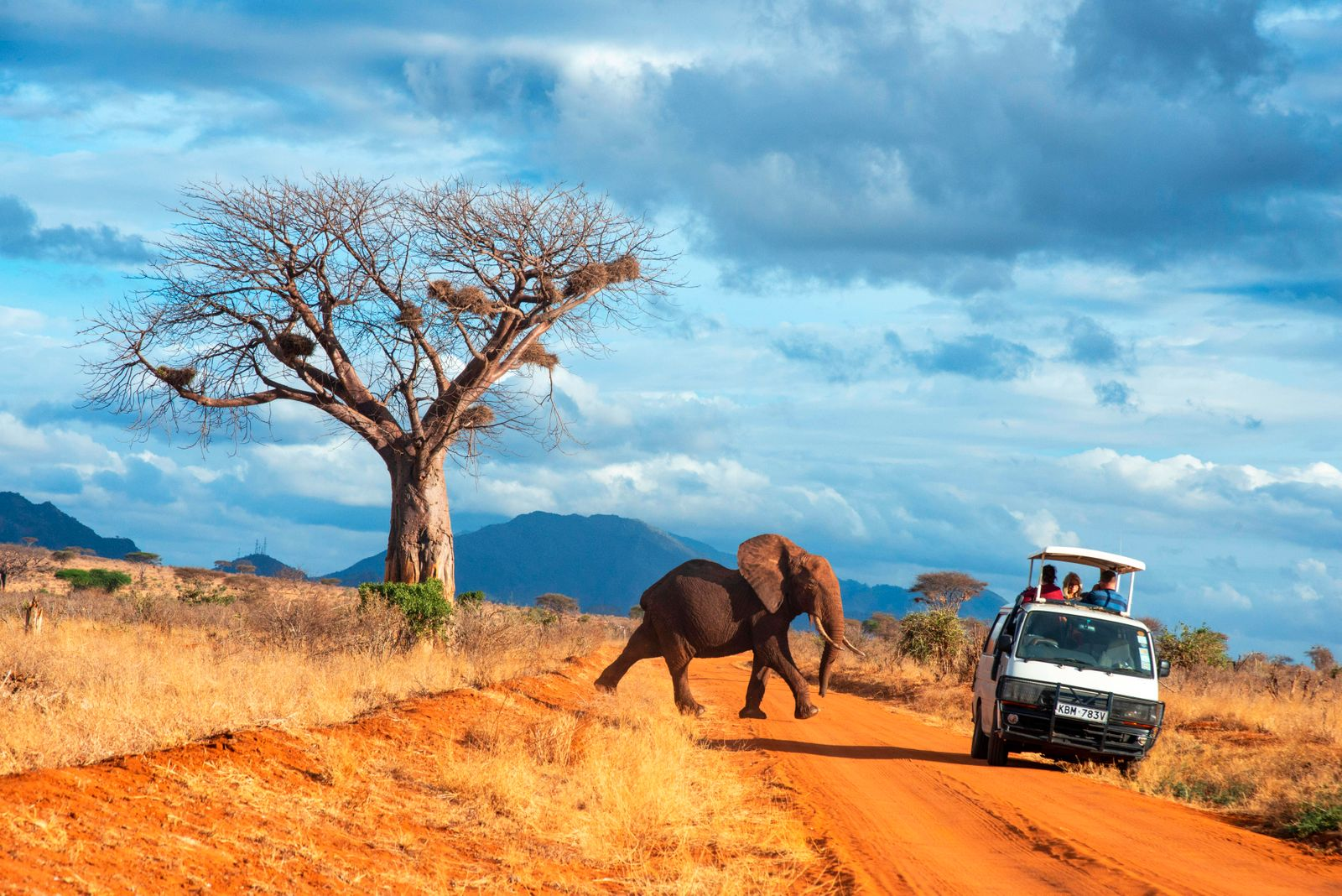 Safari vehicle car with tourists and an elephant covered in red dust blocks a track in Kenya s Tsavo National Park Kenya