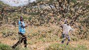 Heuschreckenschwarm von der Größe des Saarlands zieht über Ostafrika her