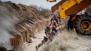 Dänemark will vier Millionen gekeulte Nerze ausgraben und verbrennen