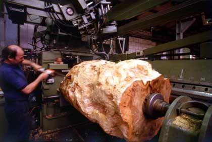 """Knolle vor dem """"Schälen"""": Das Holz wird in weniger als einen Millimeter dünne Scheiben aufgetrennt"""