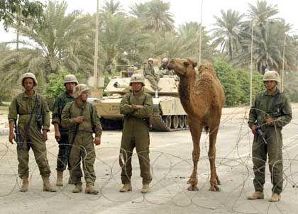 Kamel Josephine fingen US-Soldaten wieder ein