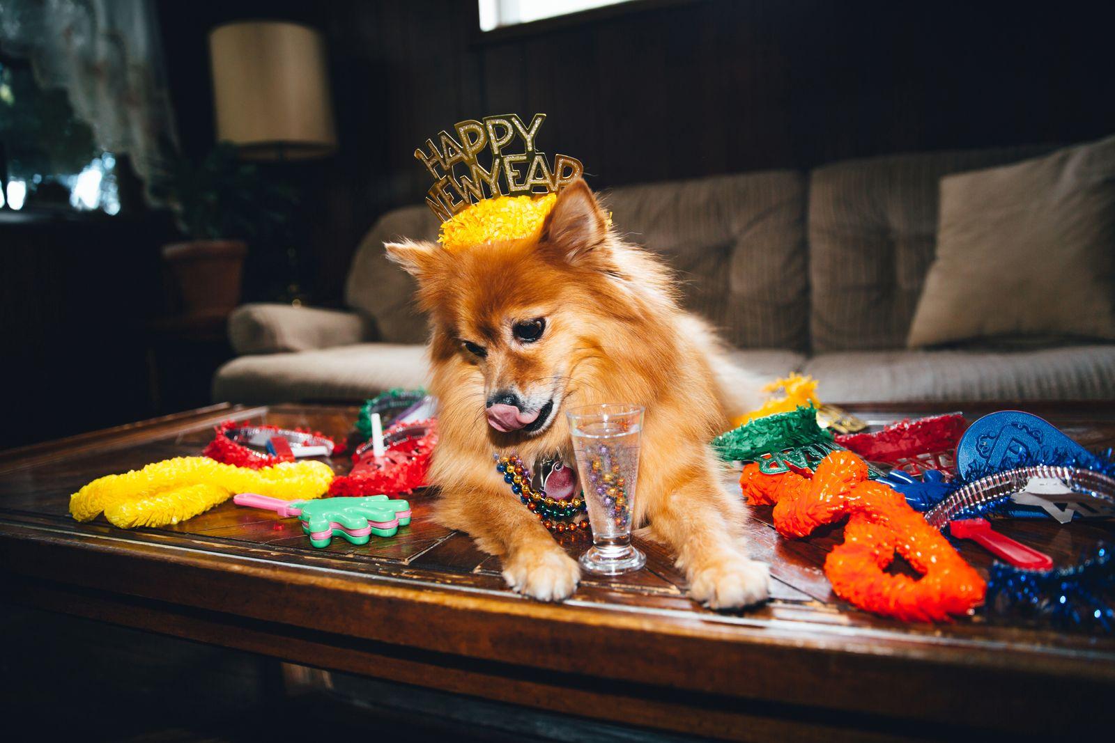 Dog New Years