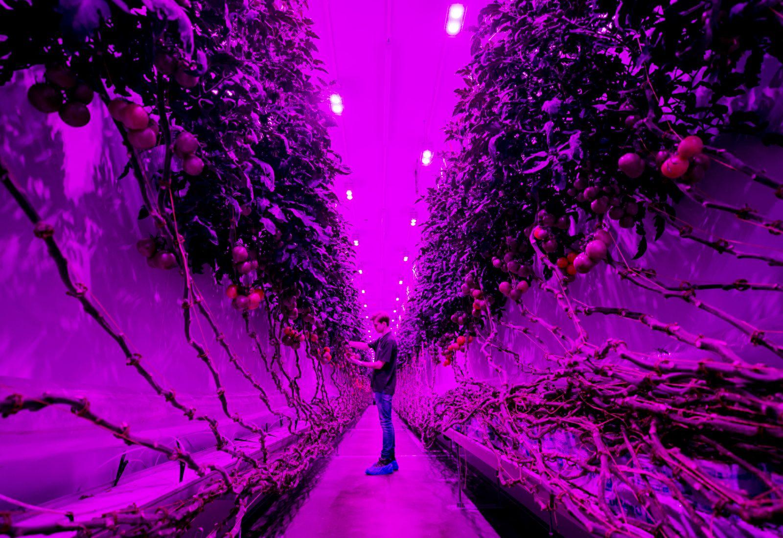 TOPSHOT-NETHERLANDS-AGRICULTURE-TECHNOLOGY