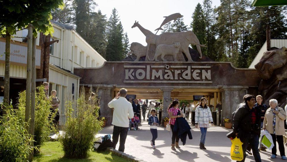 Schwedischer Tierpark Kolmården: Tödlicher Angriff im Wolfsgehege