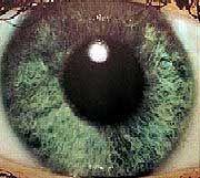 Überwachungsstaat USA: Verschärfung der Gesetze nach dem 11. September