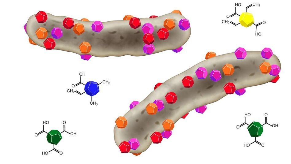 Tod durch Andocken: Nanodiamanten (farbig) binden an Bakterienzellen (grau)
