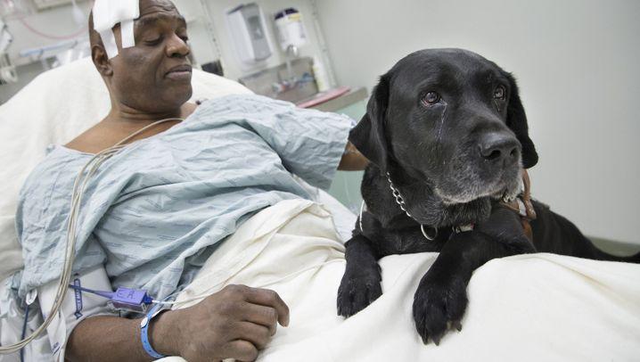 """Besitzer von Blindenhund: """"Er rettet mein Leben eigentlich täglich"""""""