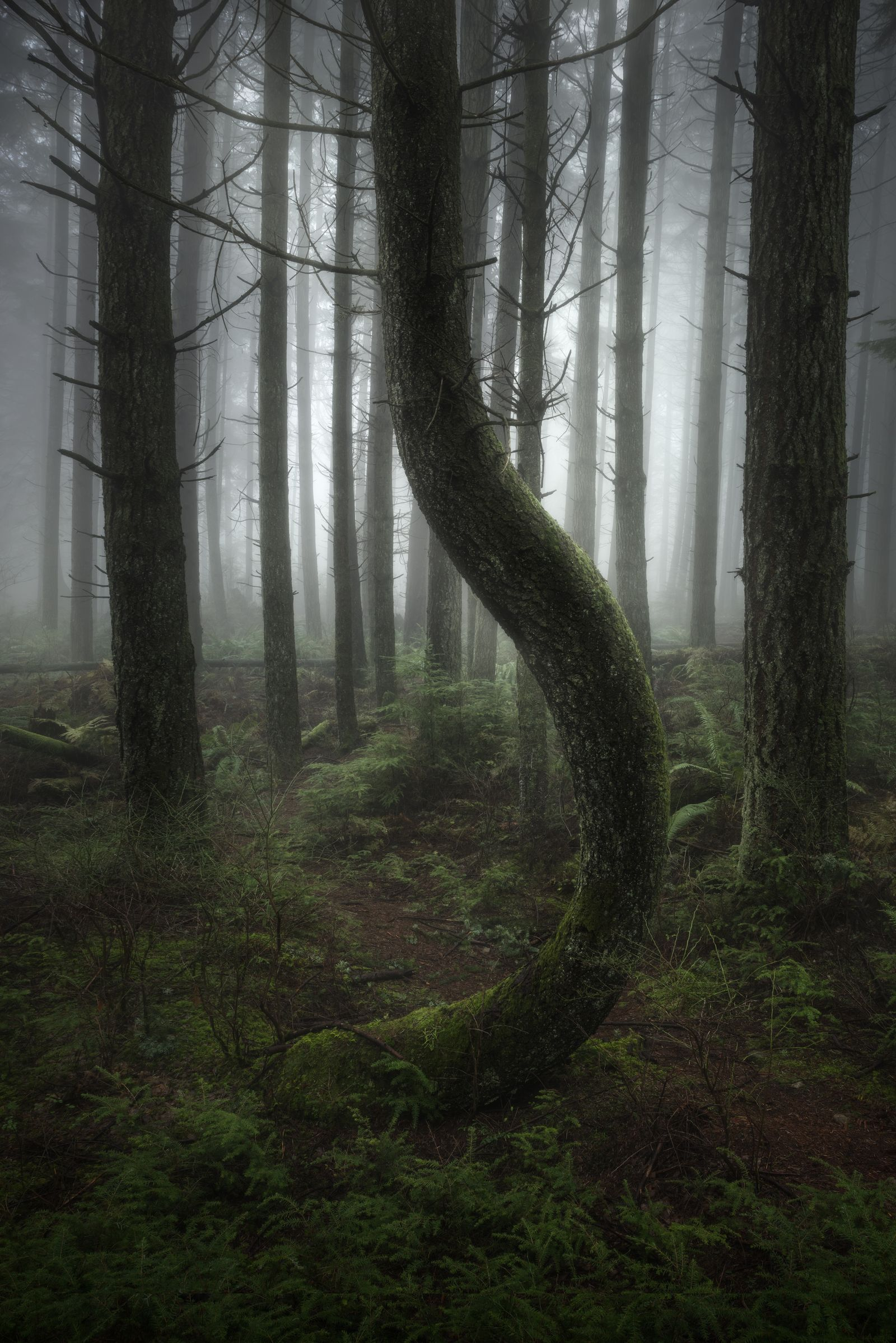The International Landscape Photographer of the Year/ 3d Photopgrapher