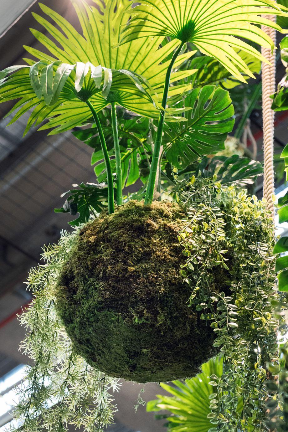 Deko-Ideen für Pflanzen zum Selbermachen - DER SPIEGEL