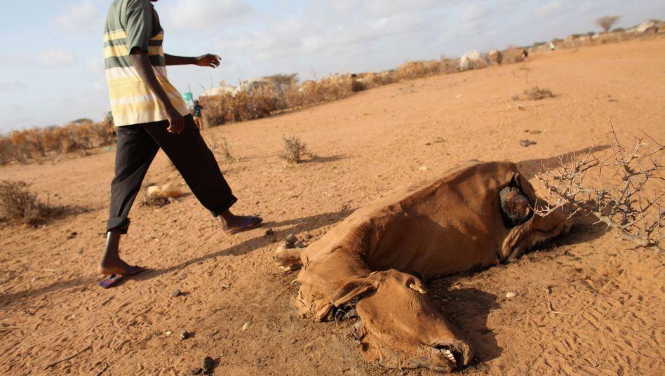 Flüchtlingslager in Kenia (2011): Dürren sorgen in Afrika für Hungersnöte