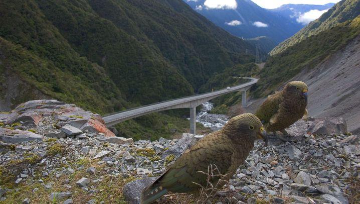 """Neuseeland: Zum Hirnjogging ins """"Road Side Gym"""""""