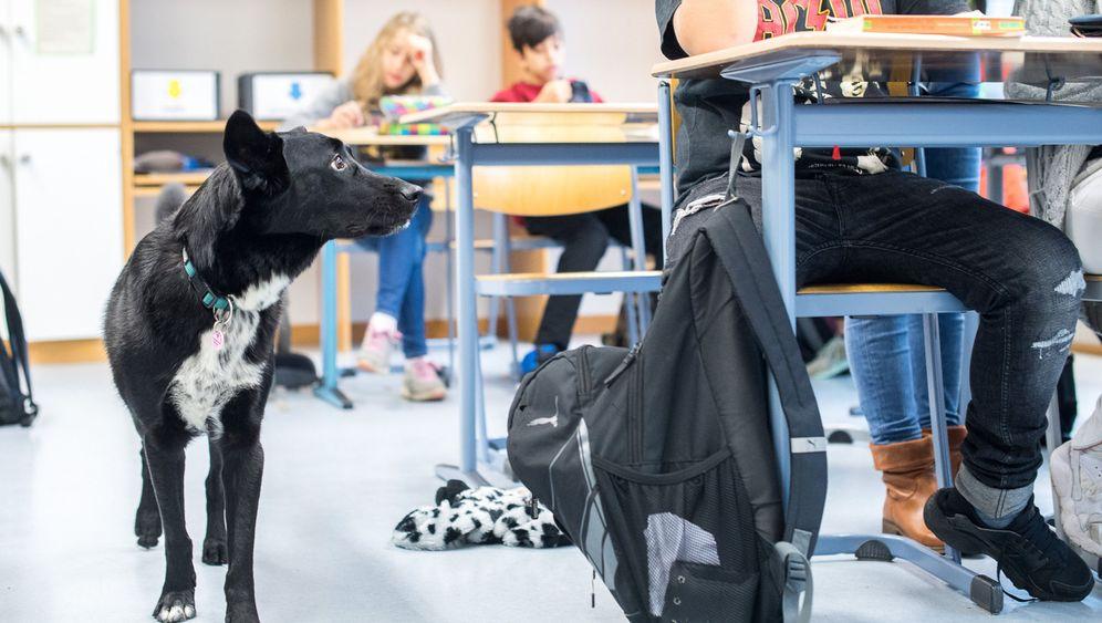 Hund im Klassenzimmer: Mitschüler auf vier Pfoten