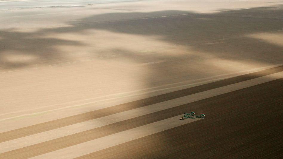 """Weizenfeld in Australien: """"Die Preise werden stark schwanken"""""""
