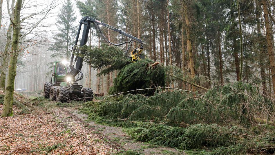 Forstarbeiter beseitigen in Sachsen Sturmschäden (Archivbild).