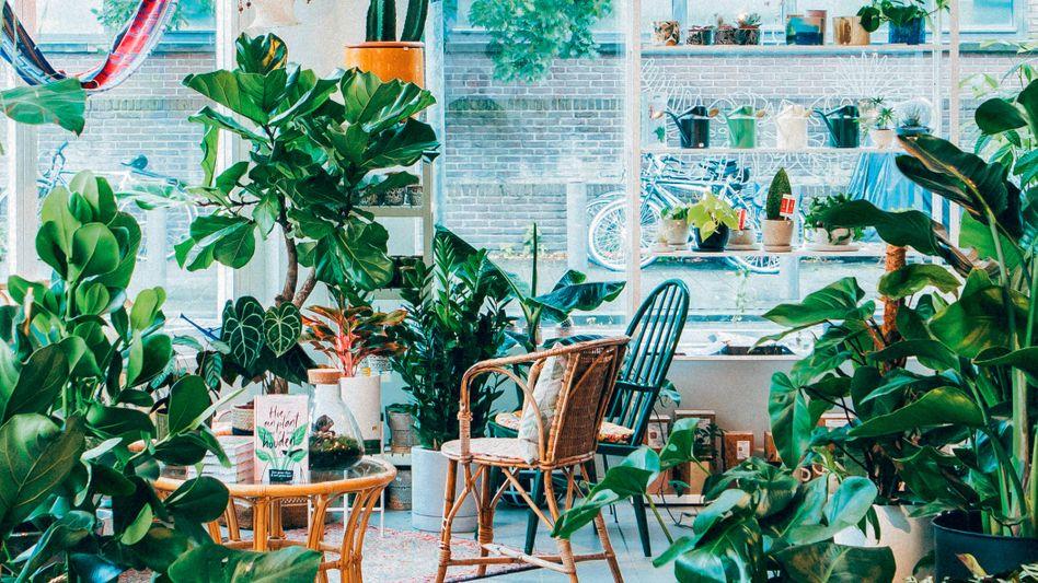 Für Stammkunden Der Blumenladen bekommt Konkurrenz: Die passende Pflanze fürs Großstadtloft kauft man in Shops wie »The Plant Corner« in Antwerpen